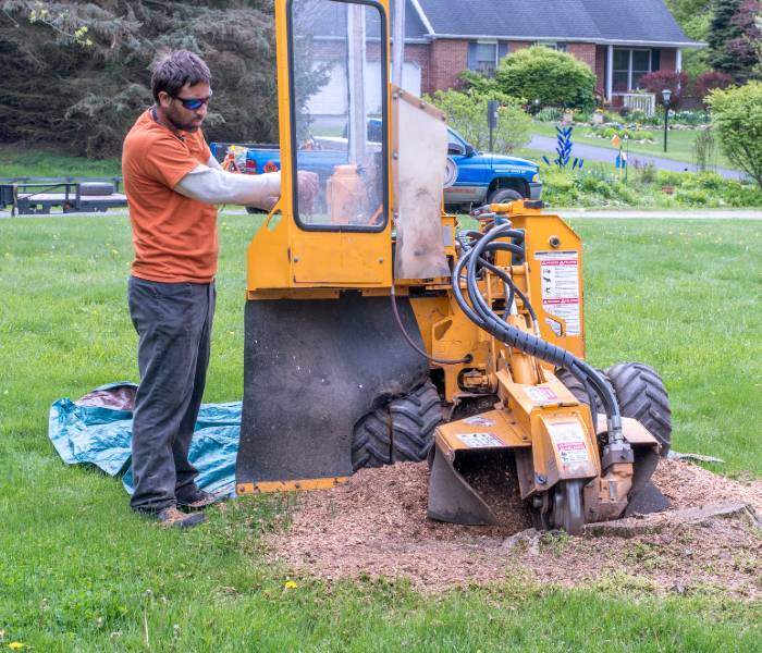 A contractor removing a tree stump from a Lakeland property.